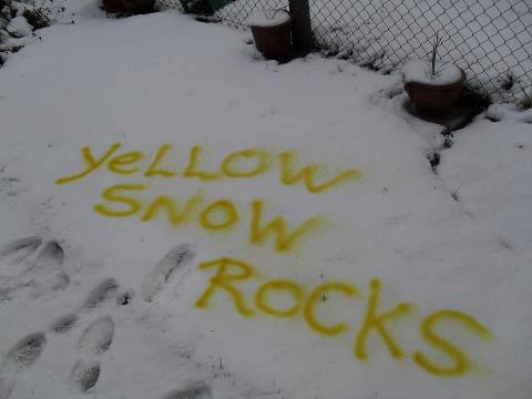 Image result for yellow snow