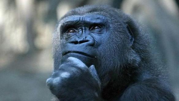 fl - ape, Rodin's thinker
