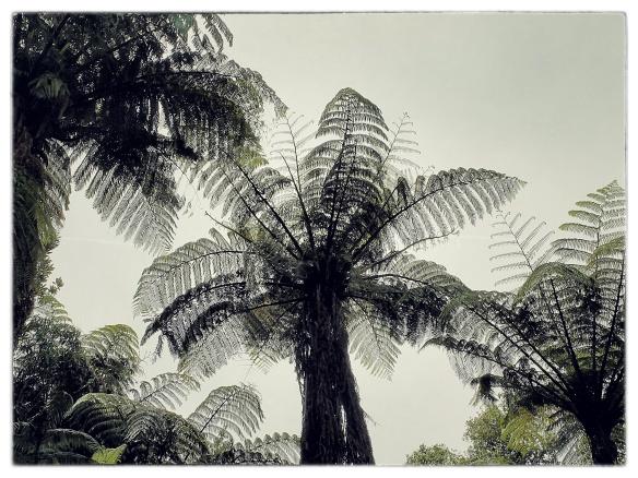image credit: Anake Goodall, Rotorua Aotearoa 2015