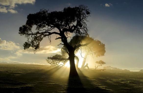 tree - through light