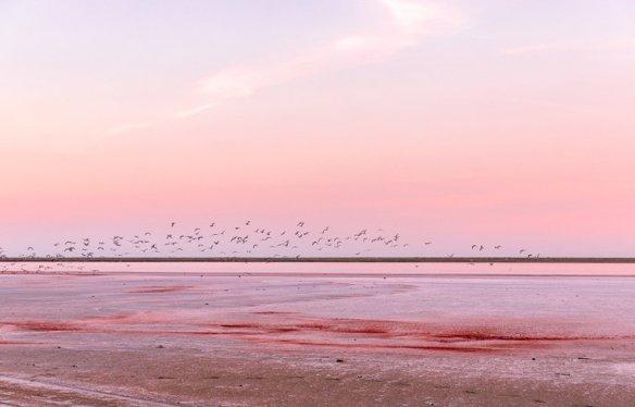 sky - pink col birds beach Svitlana Moiseienko